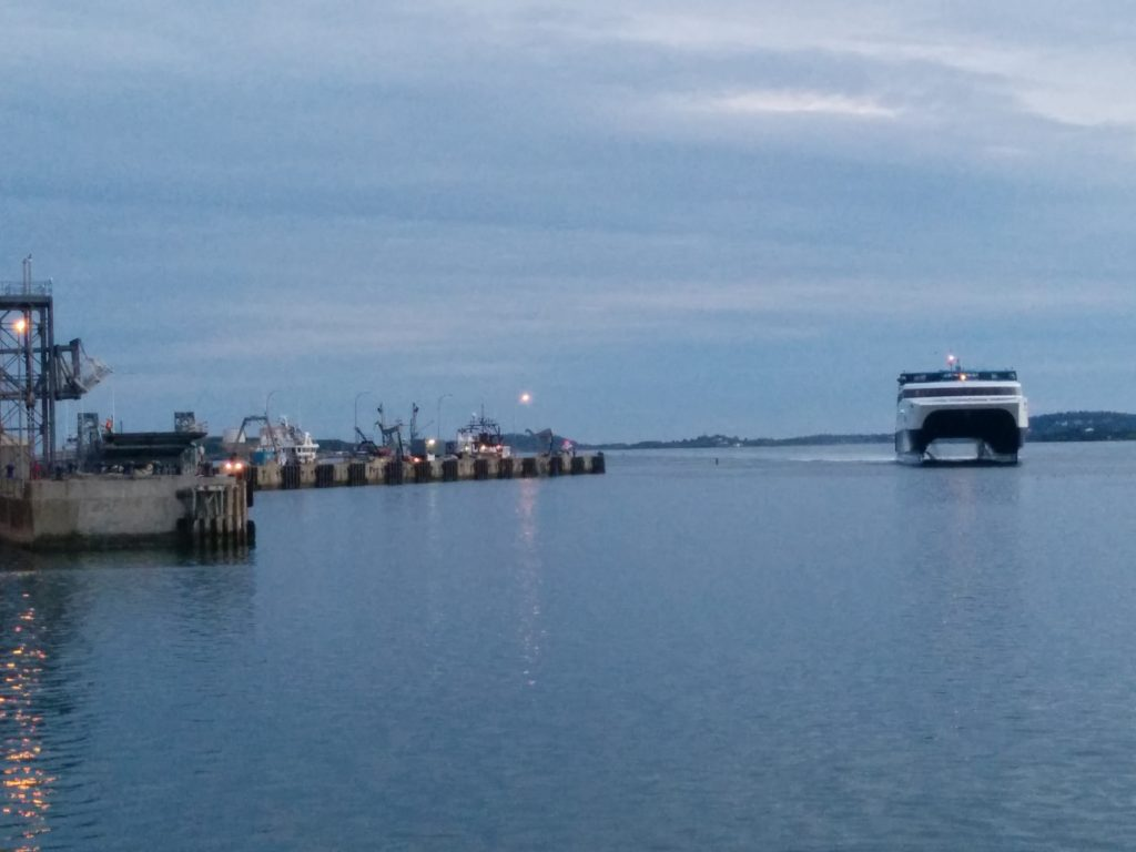 Cat Arriving in Yarmouth